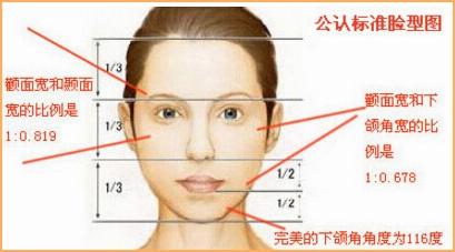 公认标准脸型