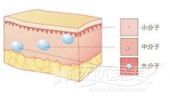 玻尿酸大、小、中分子注射层次不同