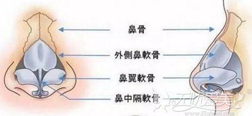 韩国will分析鼻头鼻翼缩小术该如何做