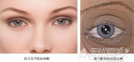 眼睛的美学标准