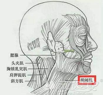 双下巴形成的原因