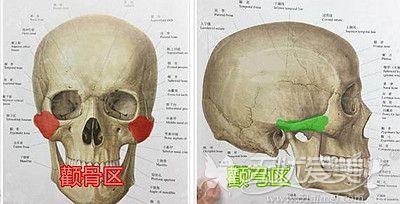颧骨颧弓所在的位置