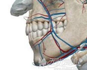 下巴部位上的神经线