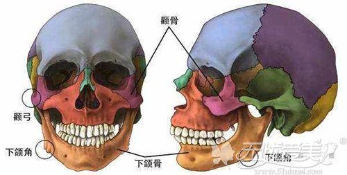 颧骨和下颌角宽需要进行磨骨手术