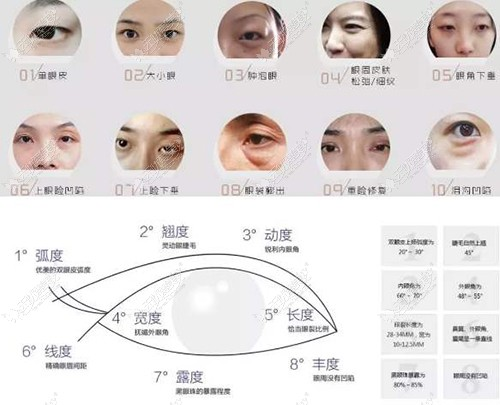 眼部美学标准